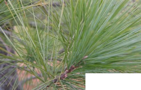 Pine Tree Talk: <em>Cottagers & Indians: A Conversation withDrew Hayden Taylor, James Whetung, Douglas Williams</em>